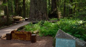 The Simple Hike In Northern California That Takes You Through The Most Magnificent Forest