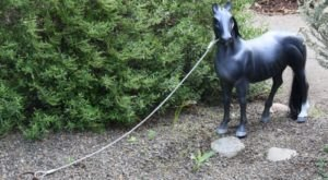 Tiny Horses Are Quietly Taking Over Portland's Streets And It's Downright Magical