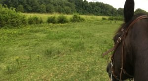 This Horseback Tour Through The Tennessee Countryside Will Enchant You In The Best Way
