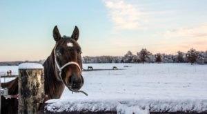 The Winter Horseback Riding Trail Near Minneapolis That's Pure Magic