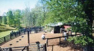 The Adorable Goat Farm In Georgia That's Perfect For An Afternoon With The Family