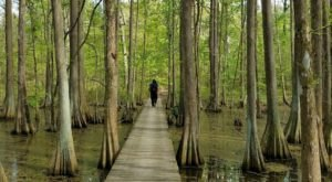 The One Hike In Louisiana That Makes You Feel Like You've Landed In A Jungle
