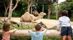 There's A Wildlife Park In Rhode Island That's Perfect For A Family Day Trip