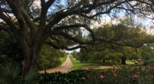 Most People Don't Realize These 7 Secret Gardens Around Louisiana Exist
