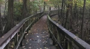 11 Totally Kid-Friendly Hikes In Mississippi That Are 1 Mile And Under