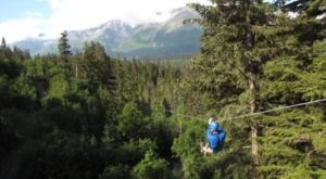 The One Tree-Top Adventure In Alaska That Belongs On Your Bucket List