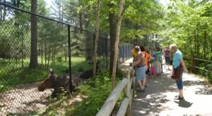 There's A Wildlife Park In Maine That's Perfect For A Family Day Trip