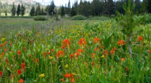 This Easy Wildflower Hike In Nevada Will Transport You Into A Sea Of Color