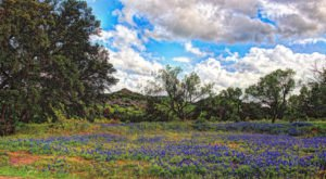 The 11 Very Best Places To Go In Texas This Spring