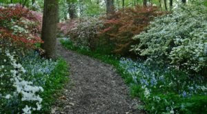 11 Easy And Beautiful Spring Hikes Everyone In Delaware Will Love