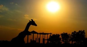 There's A Wildlife Park In Kansas That's Perfect For A Family Day Trip