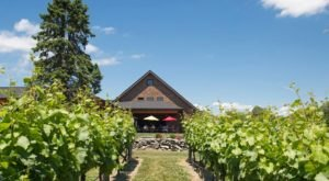 You Can Hike To This Picture Perfect Rhode Island Vineyard & Winery