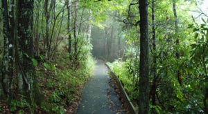 The Ancient Forest At Joyce Kilmer Memorial Forest In North Carolina Is Right Out Of A Storybook
