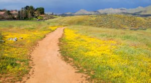 The Peaceful Nature Preserve In Southern California That Is Positively Delightful