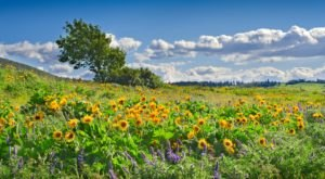 This Easy Wildflower Hike In Oregon Will Transport You Into A Sea Of Color
