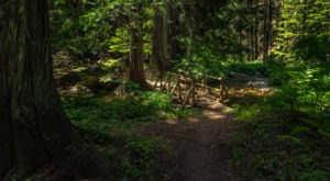 The Ancient Forest In Idaho That's Right Out Of A Storybook