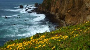 This Easy Wildflower Hike In Northern California Will Transport You Into A Sea Of Color