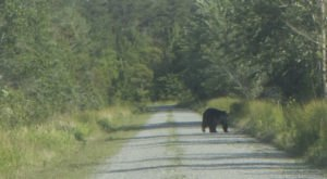 This One Of A Kind Bear Safari In North Carolina Is The Coolest Day Trip You'll Take This Year