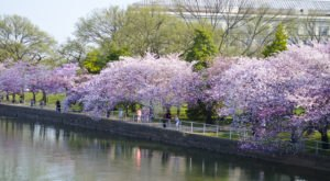 D.C.'s Cherry Blossom Peak Bloom Date Pushed Back By 10 Days Thanks To Winter Weather