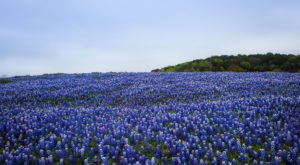 This Easy Wildflower Hike Near Austin Will Transport You Into A Sea Of Color