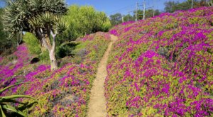 The Hidden Botanic Garden Trail In Southern California That Will Completely Rejuvenate You