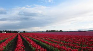 The 10 Very Best Places To Go In Washington This Spring