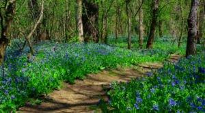 12 Easy And Beautiful Spring Hikes Everyone In Ohio Will Love