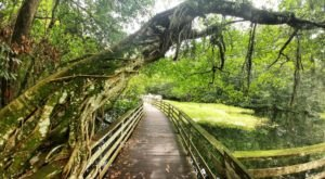 The Ancient Forest In Florida That's Right Out Of A Storybook