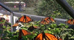 A Visit To This Magical Butterfly Farm In North Carolina Is All You Could Ever Imagine