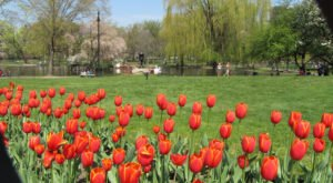 The 7 Wonders Of Boston Springtime You Must See Before They're Gone