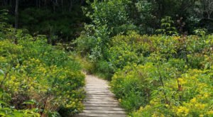 The Secret Garden Hike In North Carolina Will Make You Feel Like You're In A Fairytale