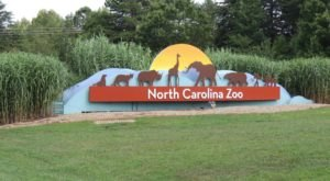 As The World's Largest Zoo, It's Time To Plan A Visit To The North Carolina Zoo