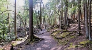 The Ancient Forest In Maryland That's Right Out Of A Storybook