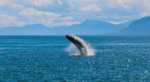 The One Magical Place In The U.S. To Watch The Great Whale Migration Like Never Before