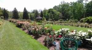 There's A Beautiful Rose Garden Hiding In Pittsburgh And It's So Worth A Visit