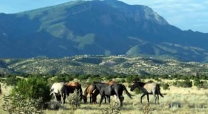 The Breathtaking Place In New Mexico Where You Can Watch Wild Horses Roam
