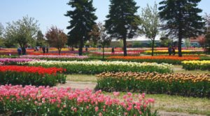 A Trip To Michigan's Neverending Tulip Field Will Make Your Spring Complete