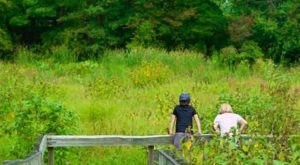 This Easy Wildflower Hike Near Cleveland Will Transport You Into A Sea Of Color