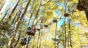 The Treetop Trail That Will Show You A Side Of Delaware You've Never Seen Before
