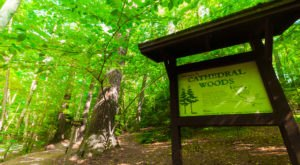 The Ancient Forest In Wisconsin That's Right Out Of A Storybook