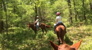 Take Your Family Horseback Riding Through The Missouri Ozarks For An Unforgettable Adventure