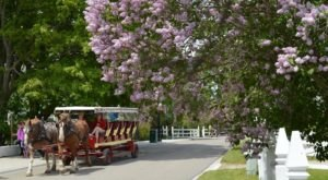 The Lilac Festival In Michigan That's Unlike Any Other