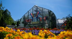 You'll Want To Plan A Day Trip To Cincinnati's Magical Butterfly House