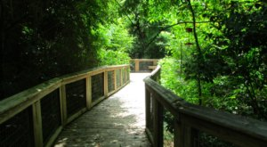 7 Boardwalk Trails In Louisiana You'll Fall In Love With This Spring
