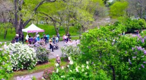 The Lilac Festival In Massachusetts That's Unlike Any Other