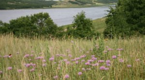 The Easy Wildflower Hike In North Dakota That Will Transport You Into A Sea Of Color