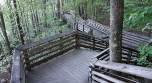 This Beautiful Boardwalk Trail In West Virginia Is The Most Unique Hike Around
