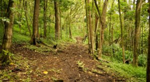 9 Totally Kid-Friendly Hikes In Hawaii That Are 1 Mile And Under