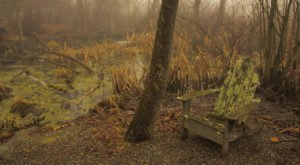 Connecticut's Bewitching Bogs Are Home To Some Entrancing Carnivorous Plants