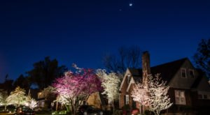 This Moonlight Bloom Walk In Kentucky Is The Most Magic You'll Experience This Spring